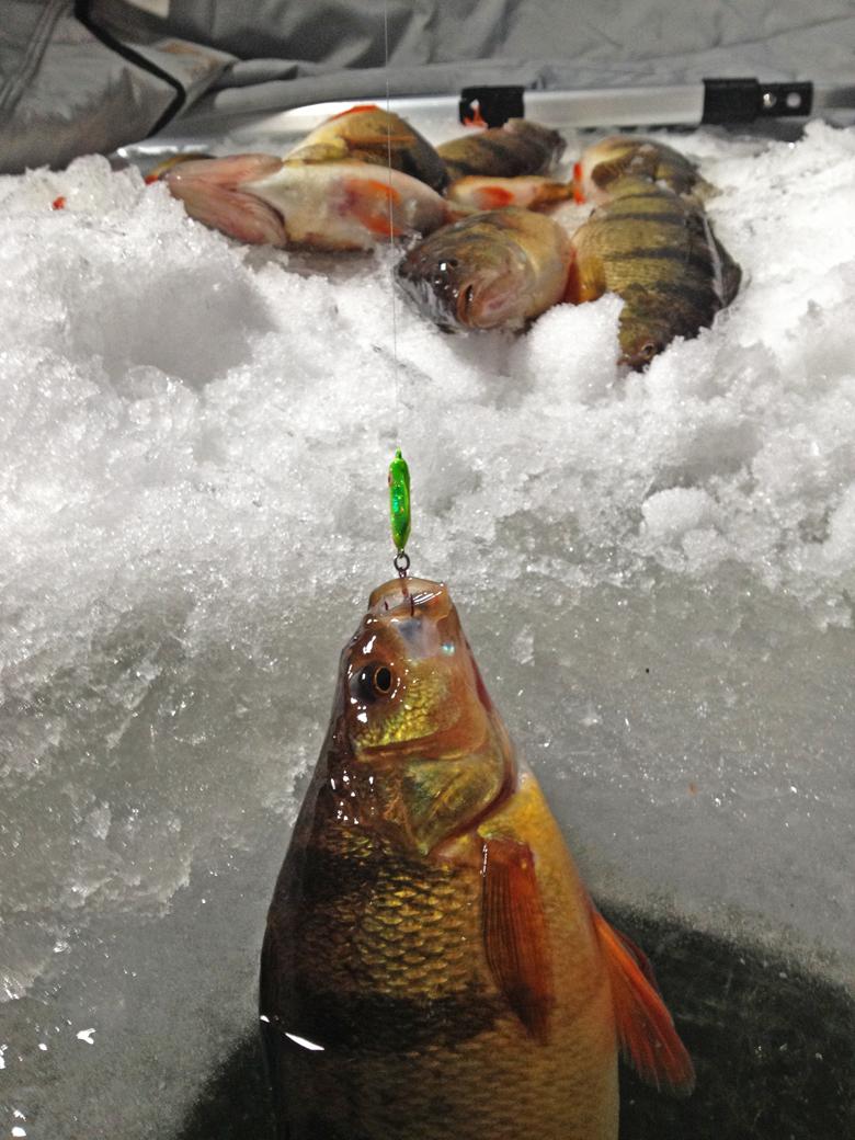 perch fishing minnesota ice fishing